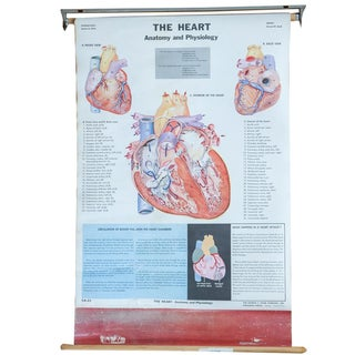 Mid-Century Vintage Heart Science Chart Crams Poster For Sale