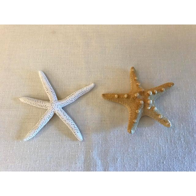 Natural Starfish - a Pair - Image 2 of 9