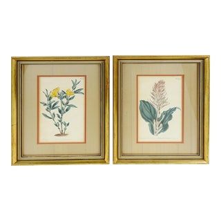 Framed Vintage Botanical Etchings - a Pair For Sale