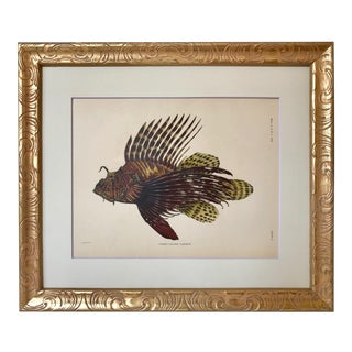 1905 Chromolithograph Hawaiian Fish For Sale