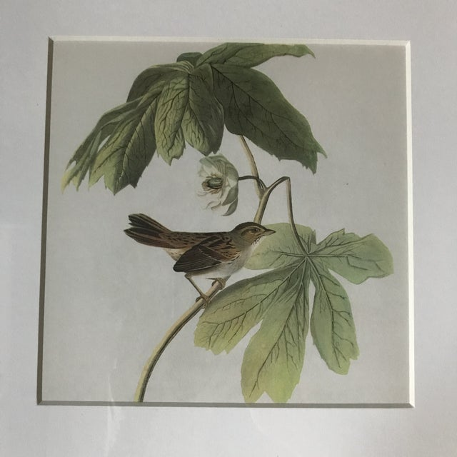 Boho Chic Framed Vintage Audubon Vireo Prints - a Pair For Sale - Image 3 of 9