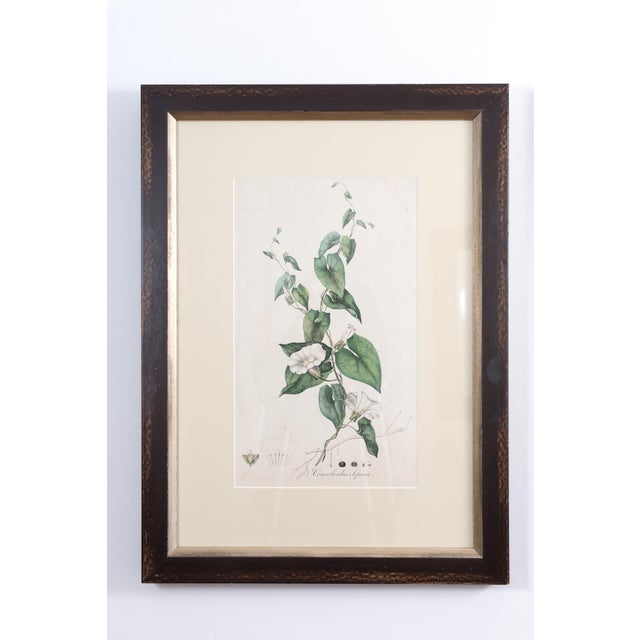Antique French Botanicals- A Pair - Image 2 of 5