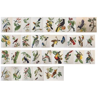 1st Edition Full Color Lithographs of Tropical American Birds - Set of 30 For Sale