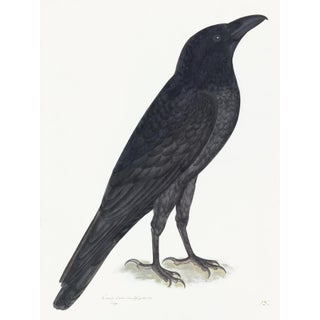Raven Plate 15 by Olof Rudbeck (Cfa-Wd) For Sale