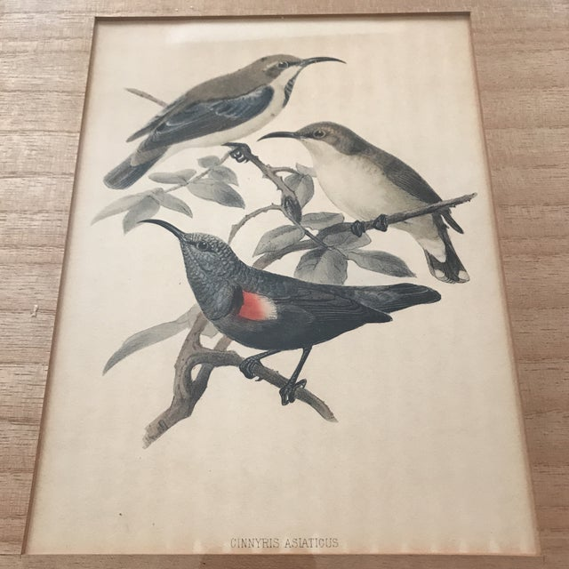 1920s Early 20th C. Framed Avian Prints - A Pair For Sale - Image 5 of 9