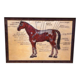 Large Hand-Painted Diagram of Horse in French, circa 1930 For Sale