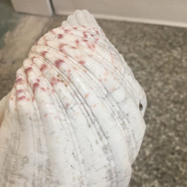 Contemporary Natural Clam Shell Half For Sale - Image 3 of 11