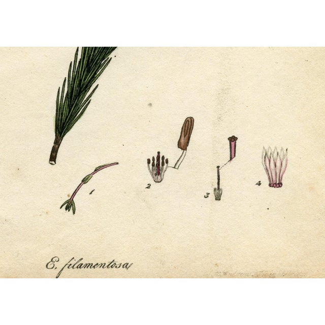 Country 1804 Heather Engraving by Henry Andrews For Sale - Image 3 of 5