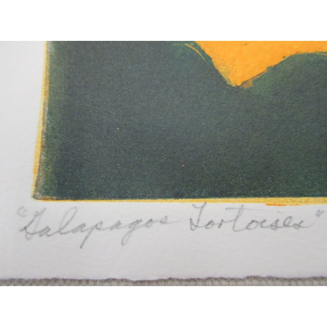 Vintage Lithograph Titled: Galapagos Tortoises Signed by Artist: Ann Zahn For Sale - Image 4 of 5