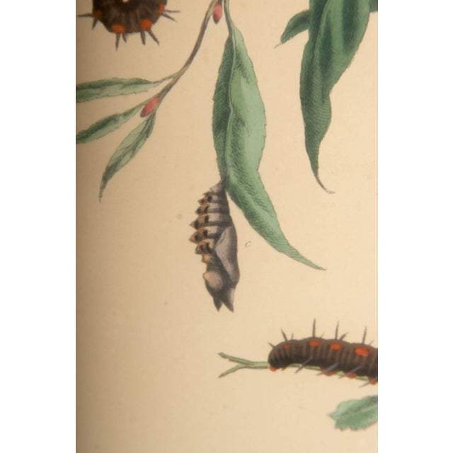 Plate Xii, Camberwell Beauty, Large Magpie Moth, Moses Harris, 1785 For Sale In San Francisco - Image 6 of 7