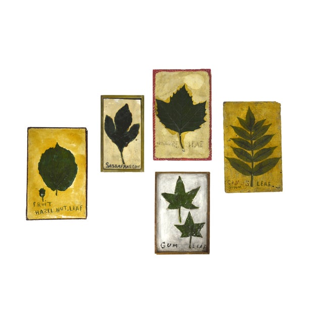 1930's Leaf Specimen Set - Image 2 of 5