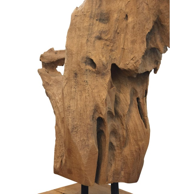 Midcentury Mounted Driftwood Specimen From the Washington Coastline For Sale In Chicago - Image 6 of 9