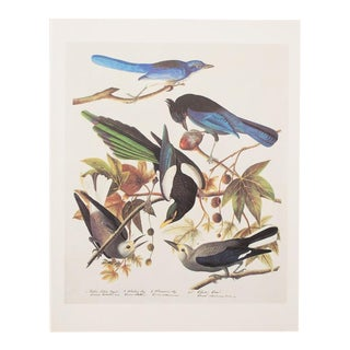 1960s Vintage John James Audubon Birds of America Reproduction Lithograph Print For Sale