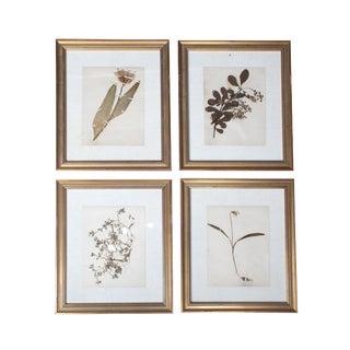 1900s Antique Signed & Herbariums, Framed - Set of 4 For Sale