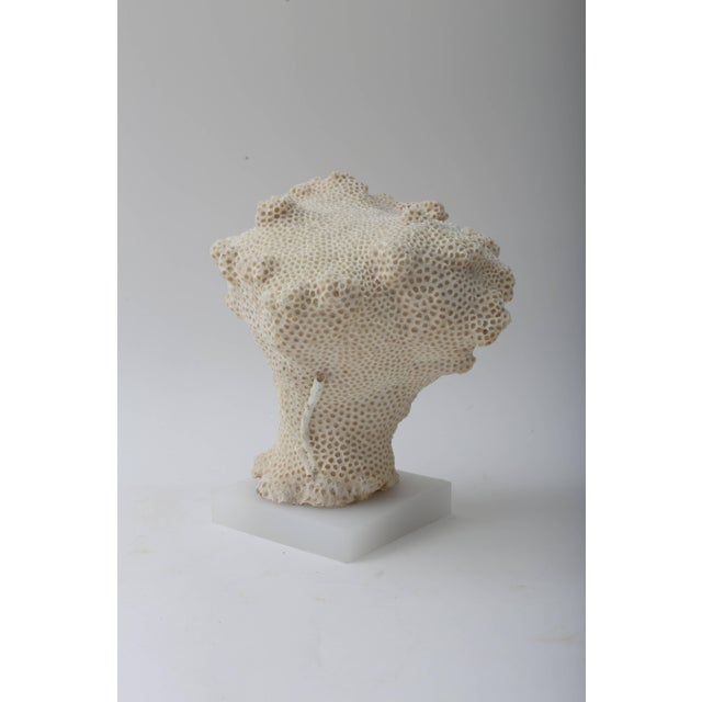 Mid 20th Century White Specimen Conch Shell Form Coral Mounted on Solid White Lucite Base For Sale - Image 5 of 8