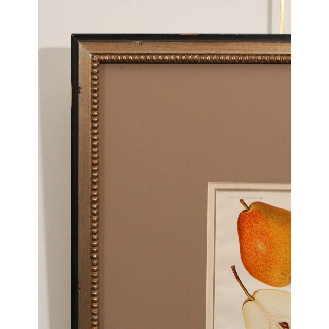 Architectural Digest Fruit Print For Sale - Image 4 of 8
