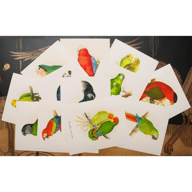 1884 Alexander Francis Lydon, Parrot Reproduction - Set of 12, N2 For Sale - Image 9 of 13