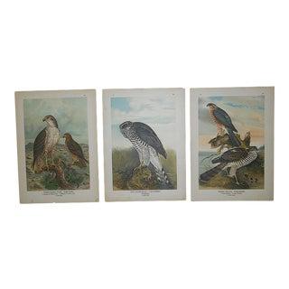 Antique Lithographs-Birds of Prey-Set of 3 For Sale