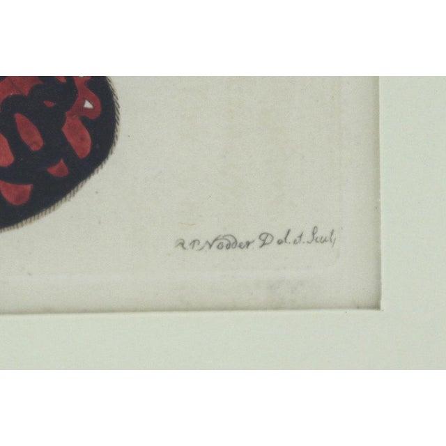 Primitive R.P. Nodder 1815 Butterfly Etching, Original For Sale - Image 3 of 5