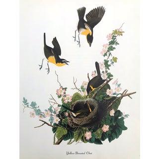 Authentic John James Audubon Vintage Yellow Breasted Chat Bird & Botanical Print For Sale