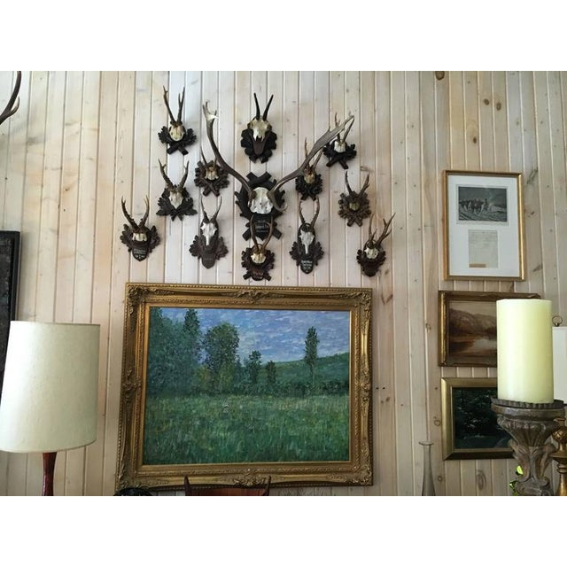 """Collection of black forest mounts including one stag, ten roe and one chinois, ranging in size roe 12"""" high 7"""" wide, stag..."""