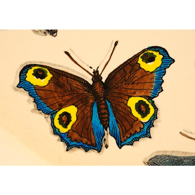 Mid-Century Modern 1950s Piero Fornasetti Butterfly Motif Serving Tray For Sale - Image 3 of 9