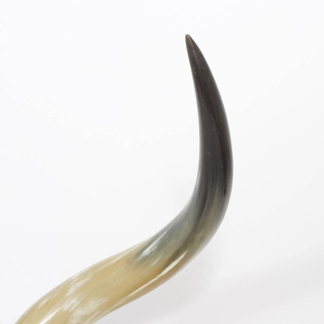 Mid 20th Century Mid-Century Large and Dramatic Polished Horns on Mounts - A Pair For Sale - Image 5 of 9