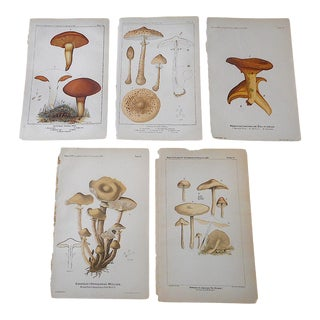 Antique 19th Century Lithographs-Mushrooms-Set of 5 For Sale