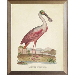 Roseate Spoonbill in Distressed Metallic Frame 19x23 For Sale