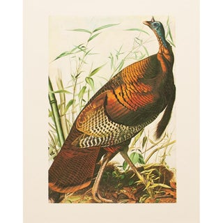 1960s Cottage Lithograph of Wild Turkey by John James Audubon