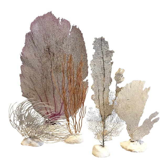 Vintage Grouping of Sea Fans - Set of 6 - Image 1 of 4