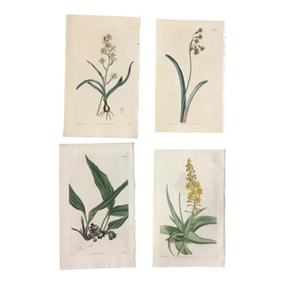 Set of 19th Century William Curtis Hand-Colored Botanical Prints