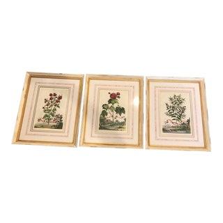 Abraham Munting Botanical Framed Prints - Set of 3 For Sale