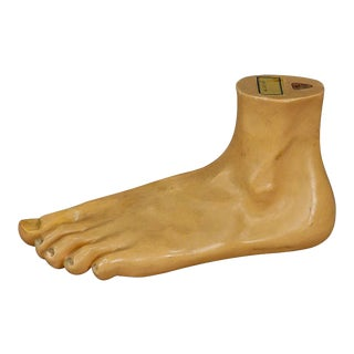 Antique 3d Anatomical Foot Model Made By Somso Ca. 1930 For Sale