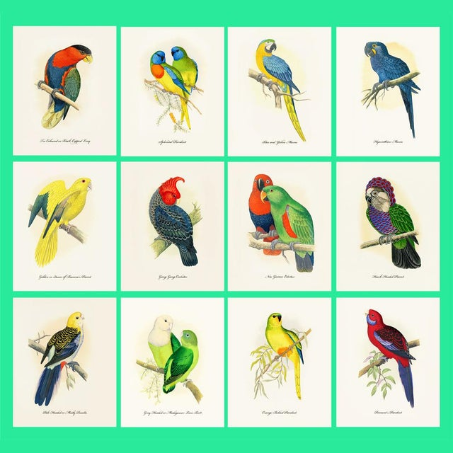 1884 Alexander Francis Lydon, Parrot Reproduction Set of 12, N1 For Sale - Image 11 of 11