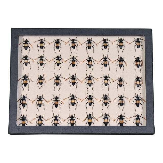 Vintage Sarreid LTD Beetles Collection Box - Image 1 of 2