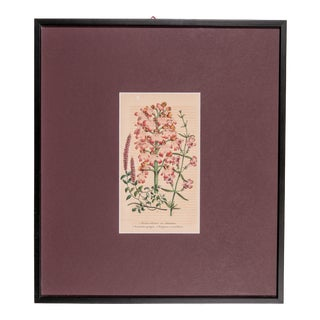 19th Century Antique Framed Orchid Engraving Print For Sale