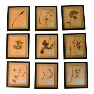 Late 20th Century Vintage French Framed Herbier/Botanical Floral Art Collection - Set of 9 For Sale
