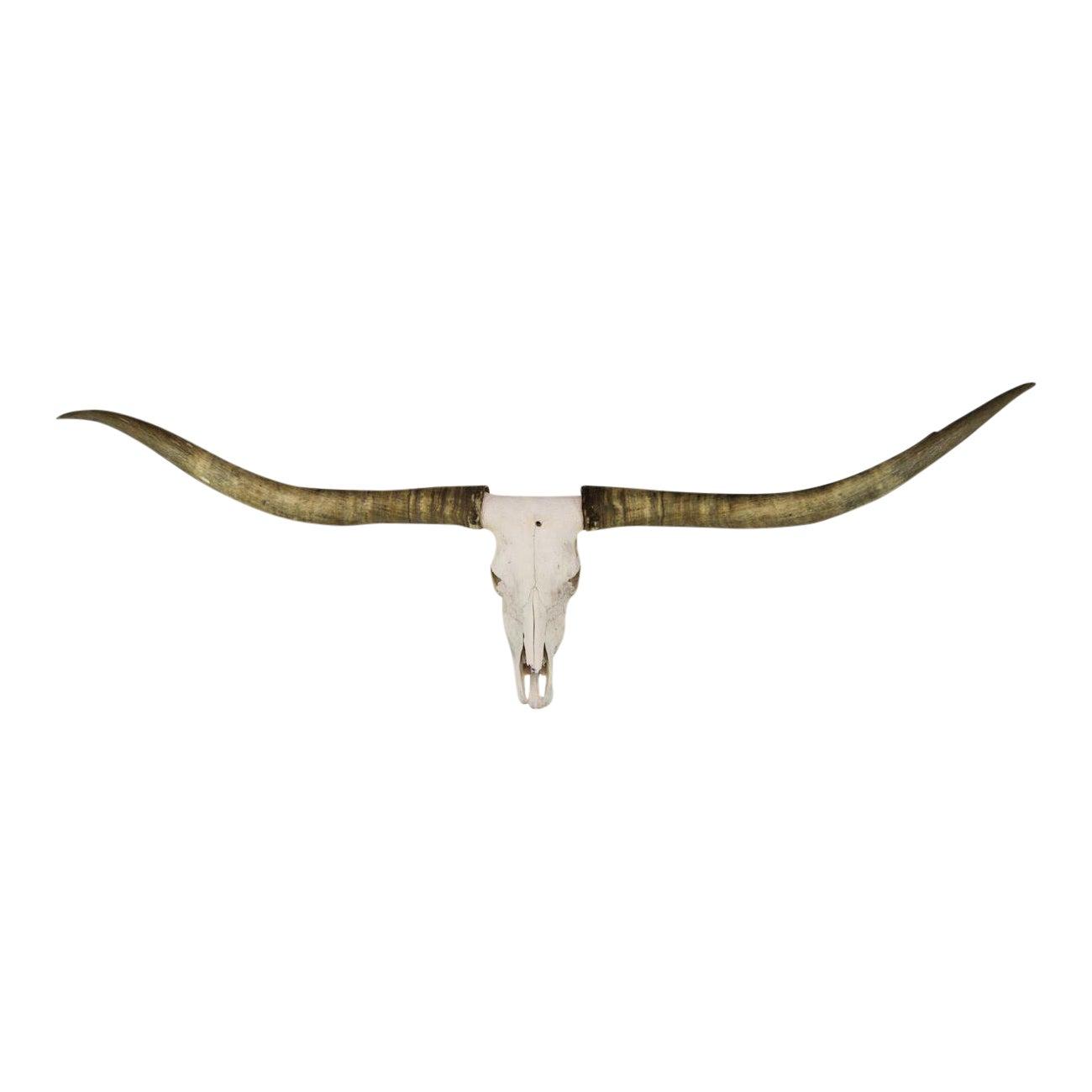 Texas Longhorn Skull Mount | Chairish