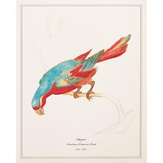 1590s Anselmus Boëtius De Boodt, Parrot Print Set of 9 For Sale - Image 9 of 13