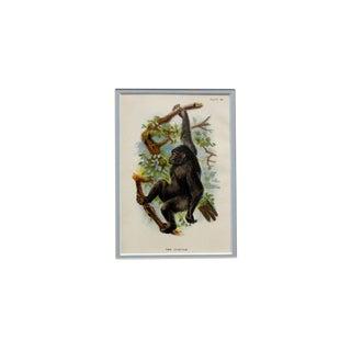"""The Gorilla"" Antique Chromolithograph For Sale"