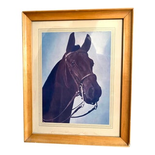 Mid 20th Century Horse Portrait Photograph, Framed For Sale