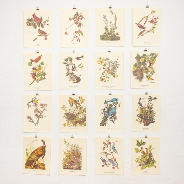 1960s Audubon Bird Prints | 17 Pc Gallery Collection For Sale - Image 13 of 13