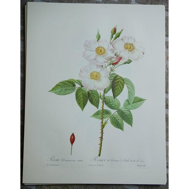 White Roses Botanical Print - Image 2 of 5