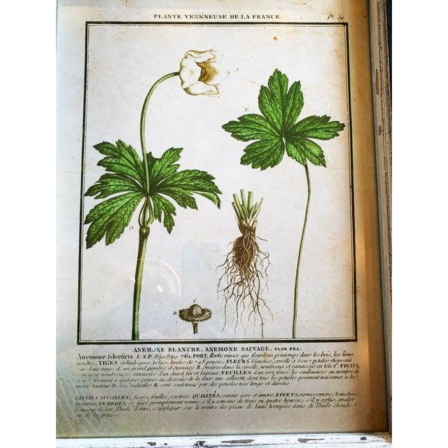 Vintage Framed French Botanical Prints Reproductions - Set of 4 For Sale - Image 10 of 13