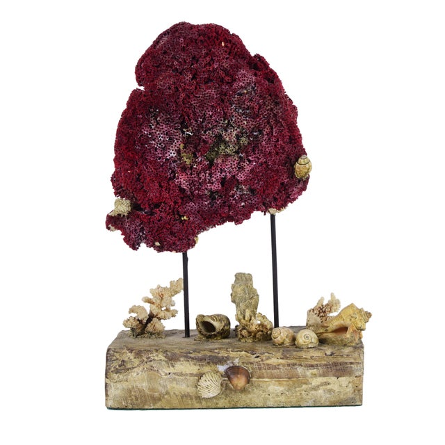 Oceanic Red Coral on Wood Base - Image 1 of 3