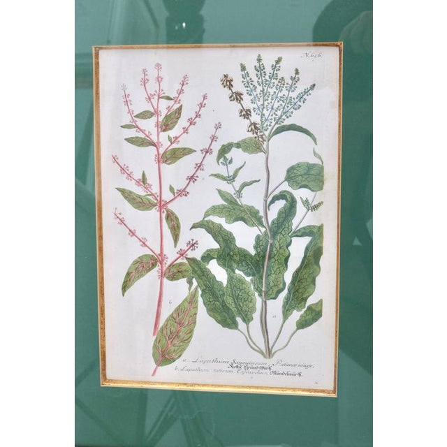 Antique 18th Century Botanical Prints Hand-Colored Engravings - a Set of 6 For Sale In West Palm - Image 6 of 12