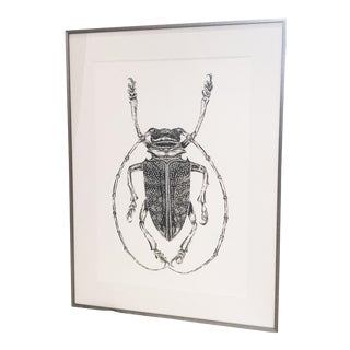 Bessie Daschbach Original Drawing Insect For Sale