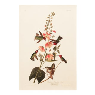 1990s Columbian Humming Bird by Audubon, Large Cottage Print For Sale