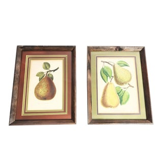 Framed Antique Botanical Pear Prints - a Pair